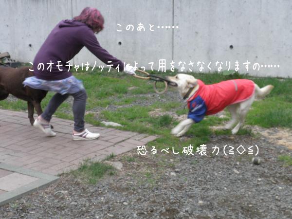 notei_20120515214125.jpg