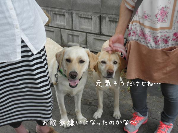 notei_20120619232203.jpg