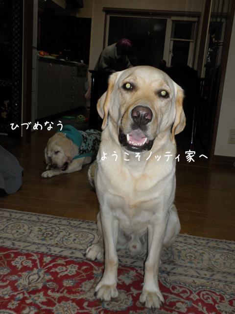 notei_20121031211434.jpg