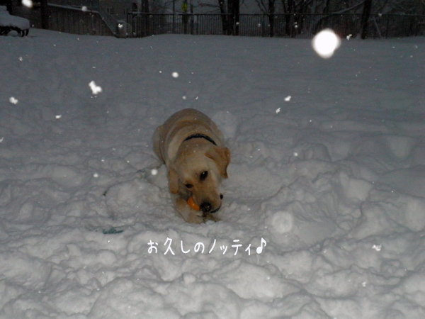 notei_20121208201655.jpg