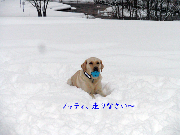 notei_20121212191847.jpg