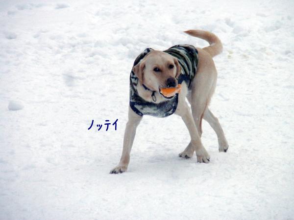 notei_20130112200006.jpg