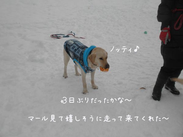notei_20130125211000.jpg