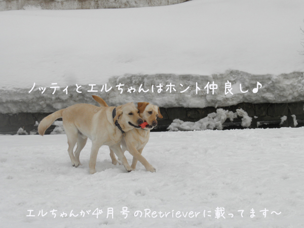 noteieru_20130317200311.jpg