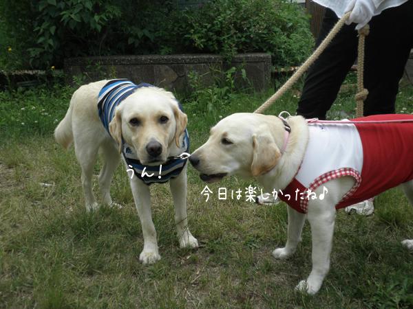 noteiwakaba_20120623215317.jpg