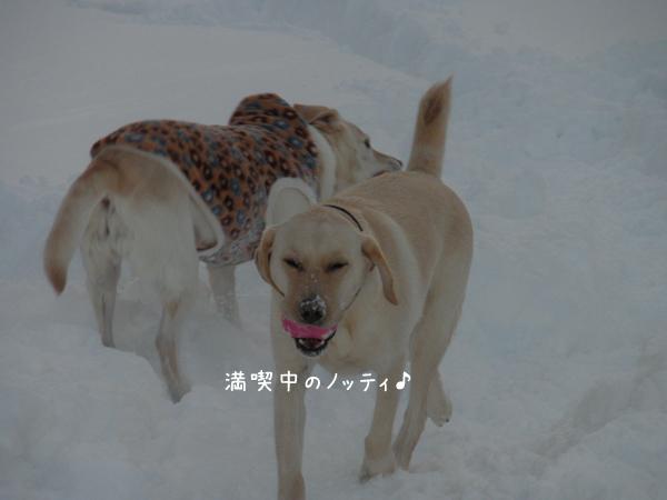 nothi2.jpg