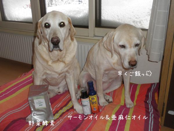 oil_20130302204858.jpg