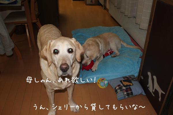 omotya1_20130129204218.jpg