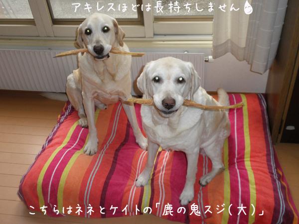 onisuzi_20120925202136.jpg