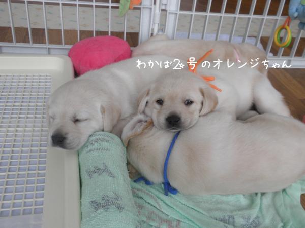 orengi_20120730230117.jpg