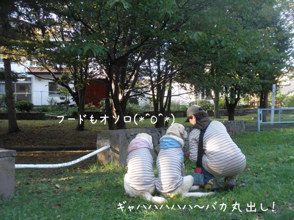 oyako2_20121008225014.jpg