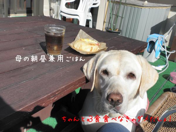 pan_20121008224318.jpg