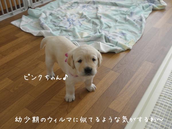 papi3_20120726220812.jpg