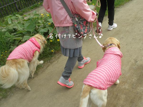 pink_20120518220328.jpg