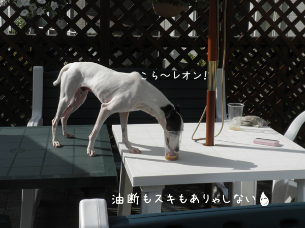 reon_20120818203635.jpg