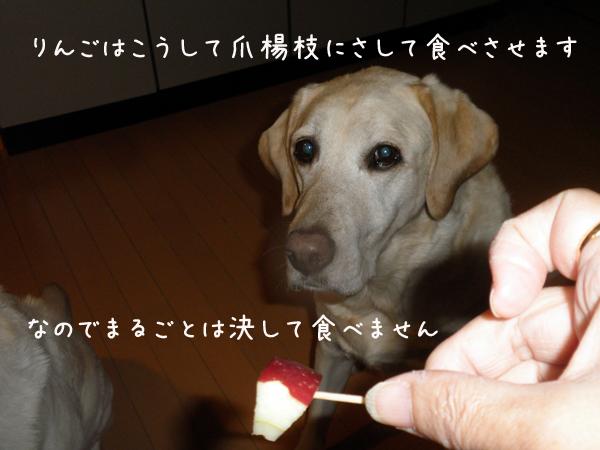 ringo_20121118202507.jpg
