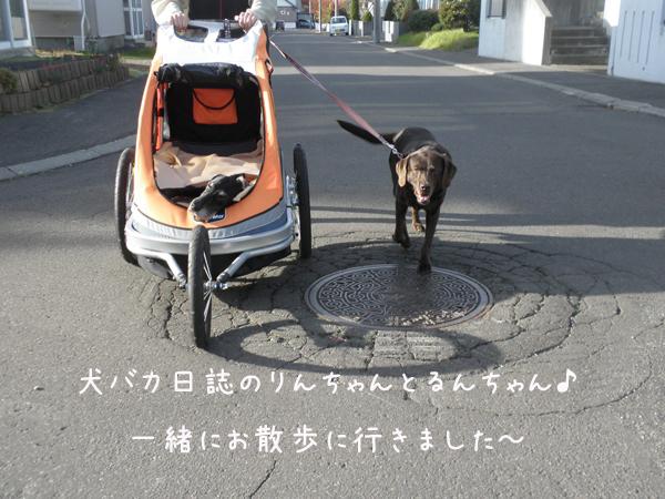 run2_20121111223831.jpg