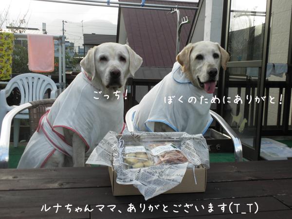 runa_20120811215004.jpg