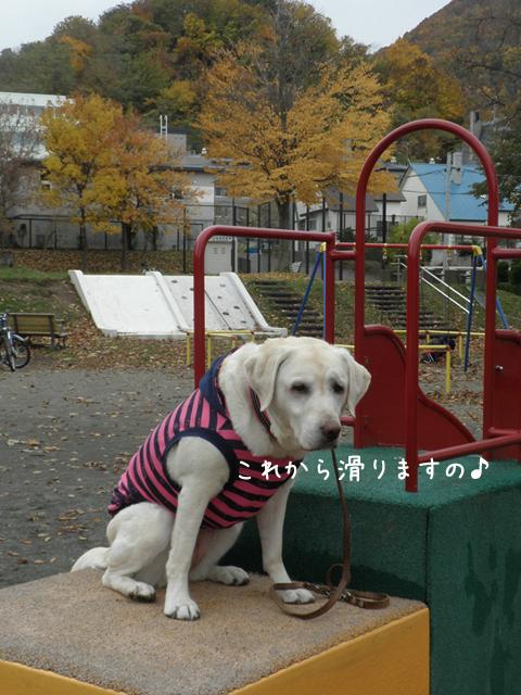 s2_20121101210622.jpg