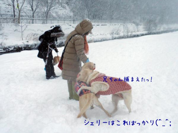 s2_20121211195522.jpg