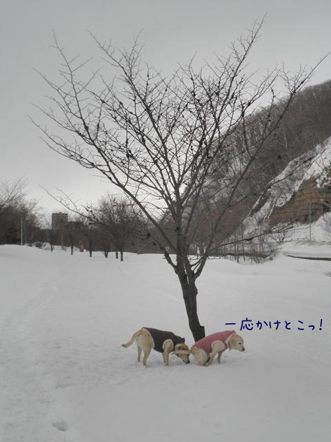 s2_20130315194348.jpg