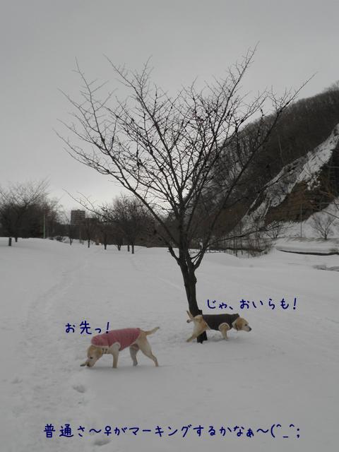 s3_20130315194352.jpg