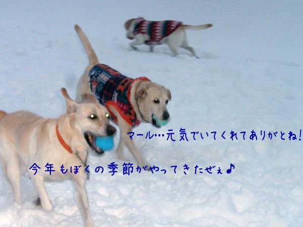 s4_20121211195704.jpg