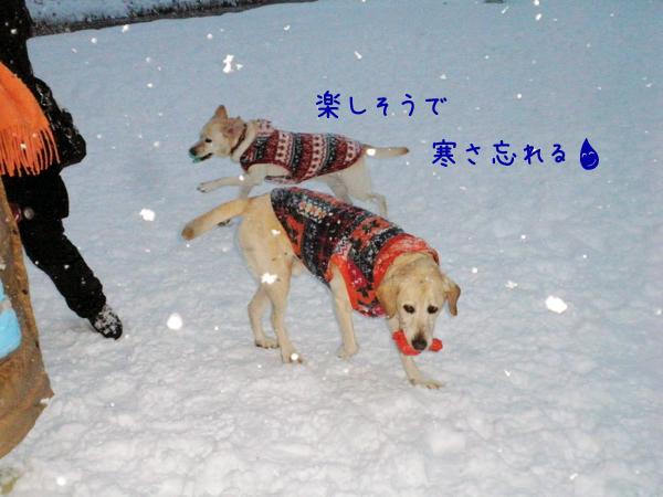 s5_20121211195709.jpg