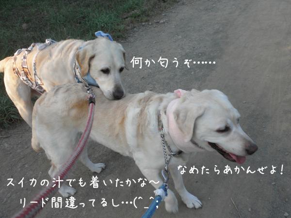 sanpo11_20120730233329.jpg