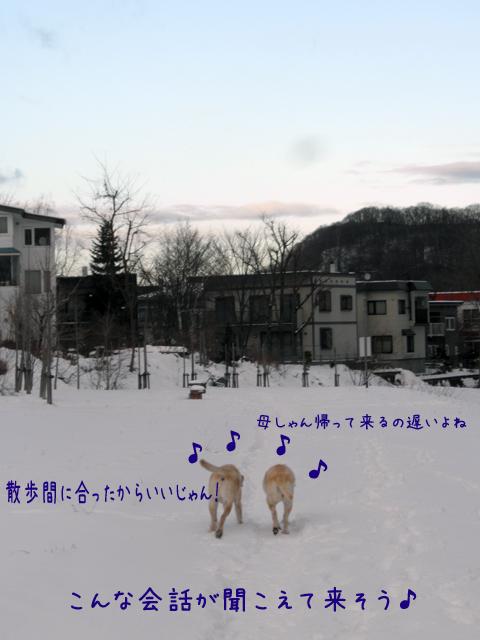 sanpo11_20121210184723.jpg