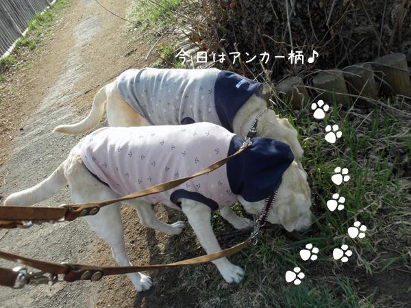 sanpo1_20120425231001.jpg