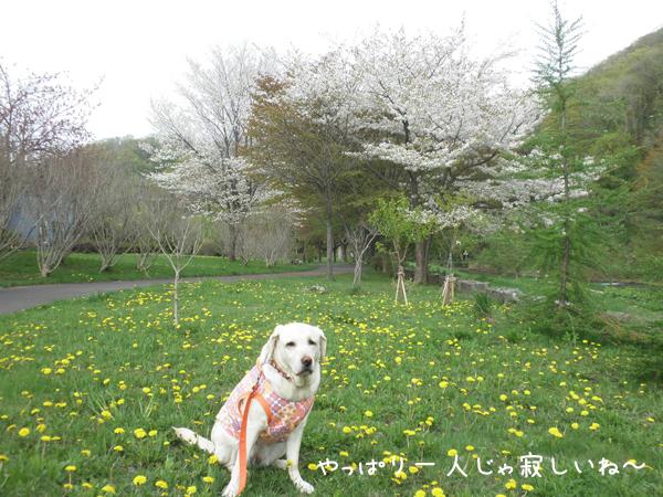 sanpo1_20120510214304.jpg