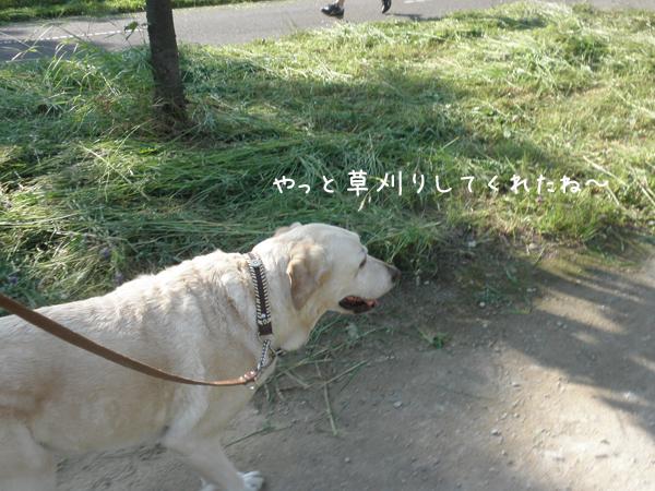 sanpo1_20120625203913.jpg