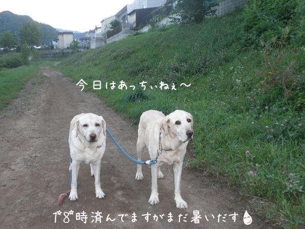sanpo1_20120821222708.jpg