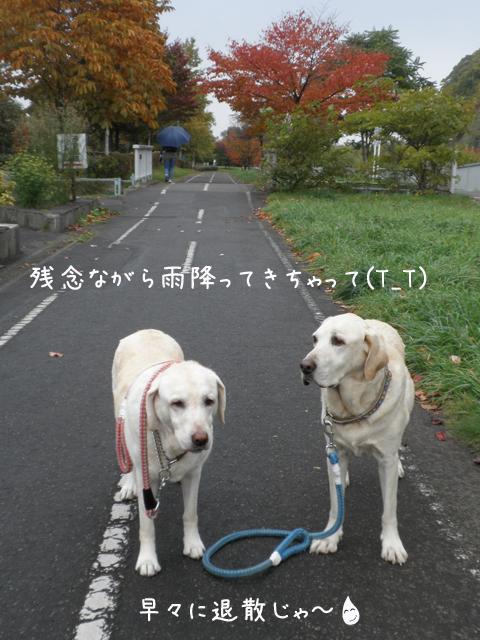 sanpo1_20121025214033.jpg