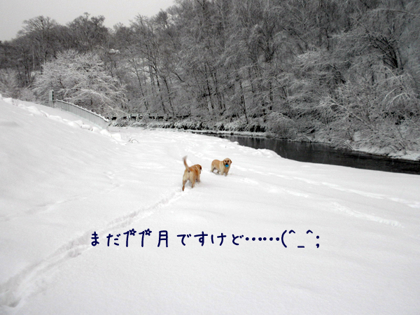 sanpo1_20121127195913.jpg