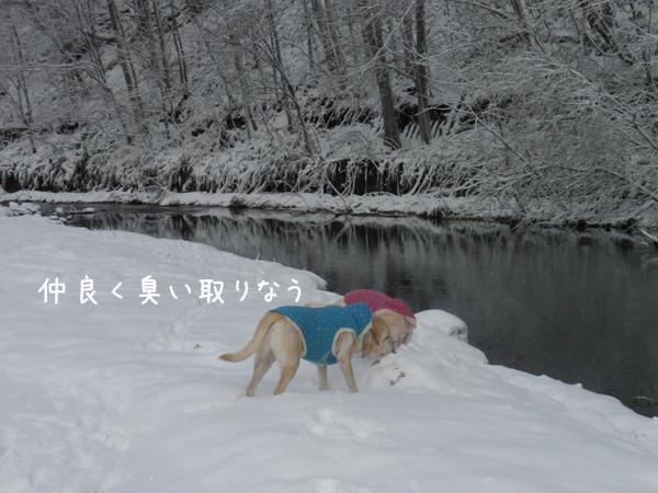 sanpo1_20121128214200.jpg