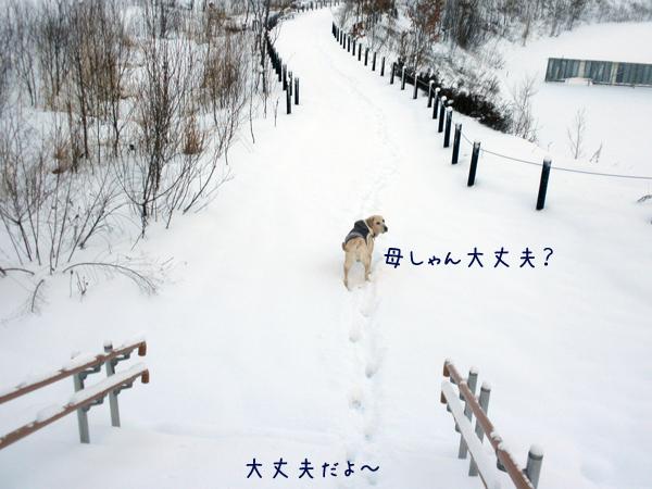 sanpo1_20121207235932.jpg