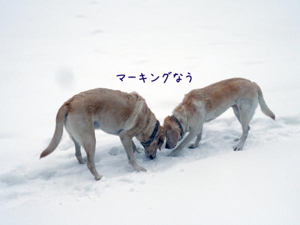 sanpo1_20121210184705.jpg
