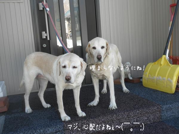 sanpo1_20130319170502.jpg