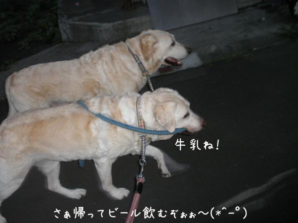 sanpo2_20120821222708.jpg