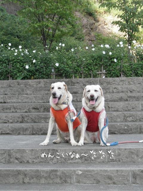sanpo2_20120904205434.jpg