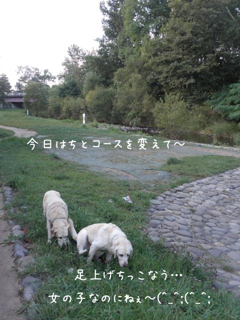 sanpo2_20120907204715.jpg