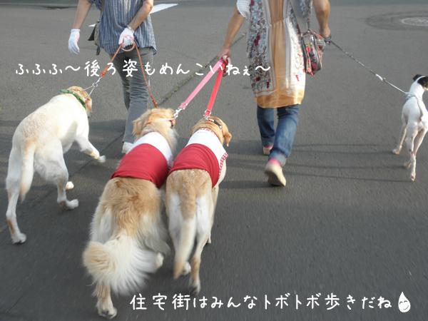 sanpo2_20120908215949.jpg
