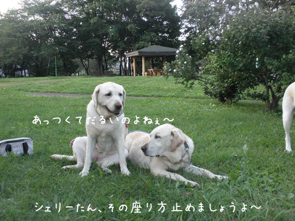 sanpo2_20120914222501.jpg