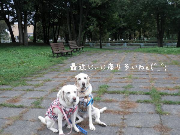 sanpo2_20121011192518.jpg
