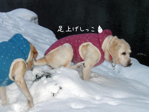 sanpo2_20121128214200.jpg