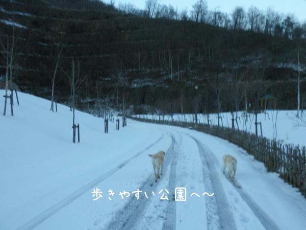 sanpo2_20121129210730.jpg