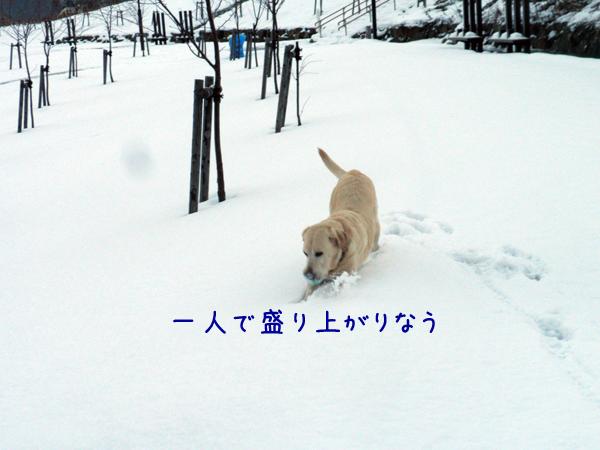 sanpo2_20121205174052.jpg