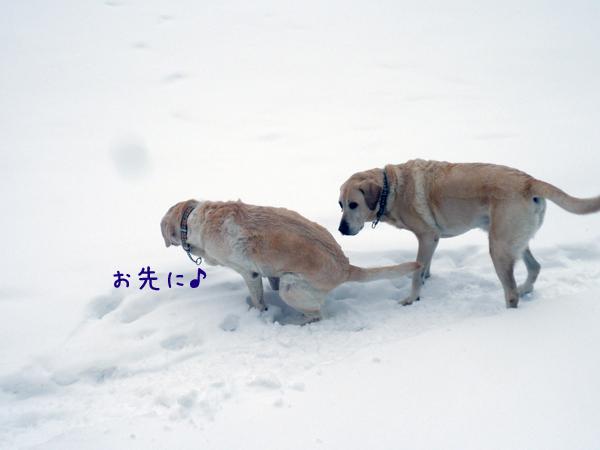 sanpo2_20121210184710.jpg